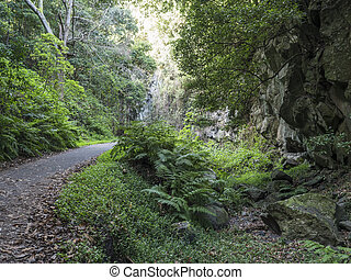 Cubo de la galga nature park with asphalt road, path in beautiful mysterious Laurel forest, laurisilva in the northern part of La Palma, Canary Islands, Spain
