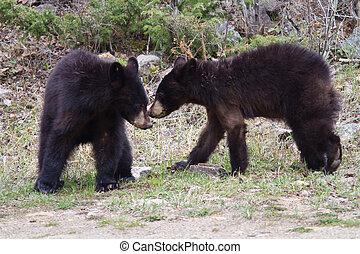 cubs, старшая