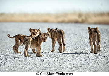 cubs out and about
