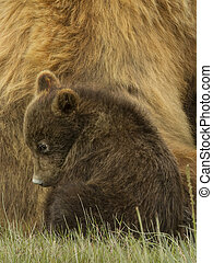 cubs with mother bear