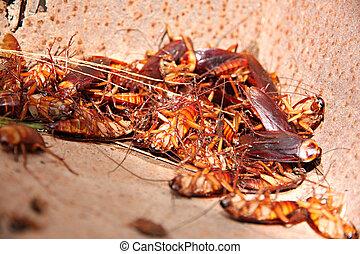 cucarachas, bin., muerto, combinación