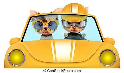 cuccioli, coppia, cabriolet, seduta