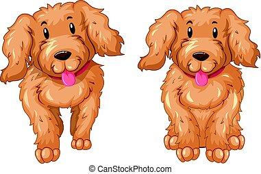 cuccioli, pelliccia, due, marrone