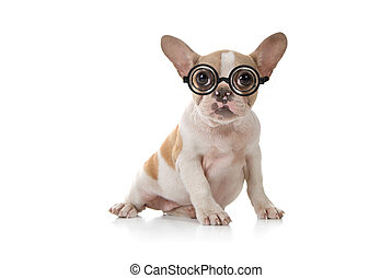 cucciolo, cane, con, carino, espressione, colpo studio