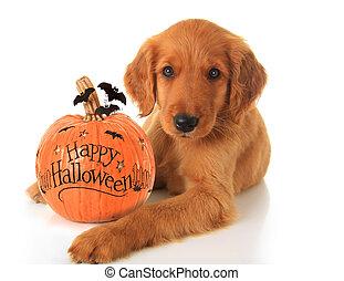 cucciolo, halloween