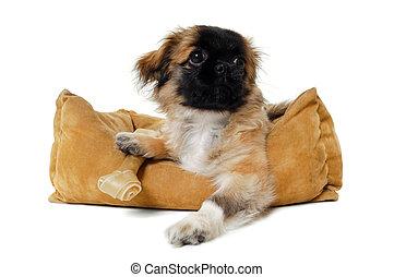 cucciolo, in, cane, letto