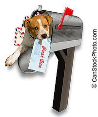 cucciolo, mailbox.