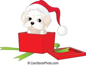 cucciolo, regalo