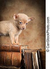cucciolo, su, vecchi libri