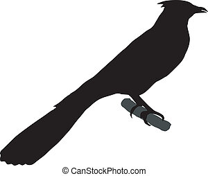 cuckoo - silhouette of cuckoo