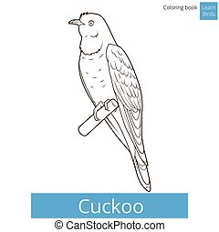 Cuckoo learn birds coloring book vector