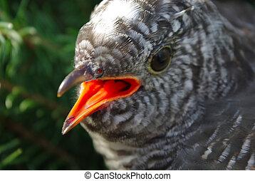 Portrait of a cuckoo among wood .