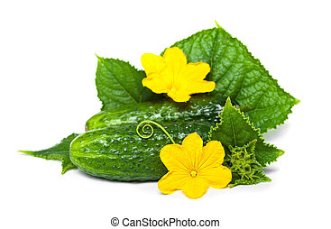 cucubmer with leaf and flower isolated on white