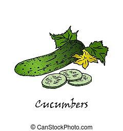 Cucumber hand drawn vector illustrations.