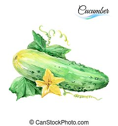 Cucumber - Watercolor cucumber isolated on a white...