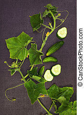 Cucumber plant and fruit from above.