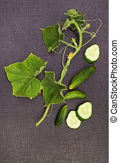 Cucumber plant and fruit.