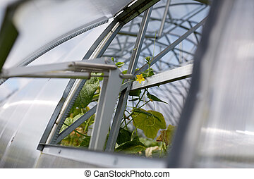 cucumber seedlings growing at greenhouse - gardening and...
