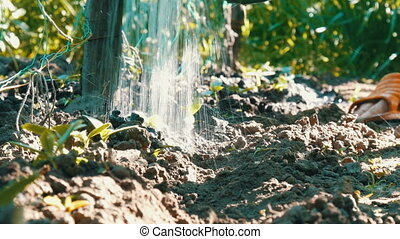 Cucumber sprouts in ground waters that stream from the...