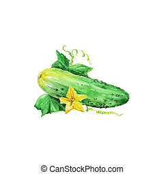 Cucumber - Watercolor Cucumber. Hand Drawn Illustration...