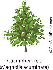 Cucumber tree icon, flat style - Cucumber tree icon. Flat ...