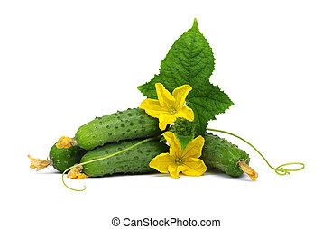 cucumber\, vert
