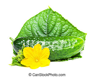 cucumber with leaf and flower isolated on white