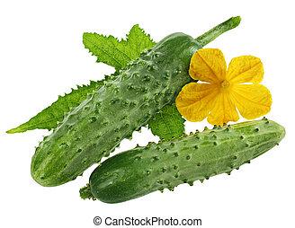 Cucumber with leaf
