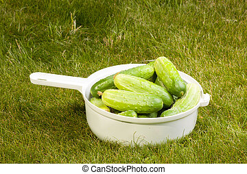 cucumbers in a white pot on the grass