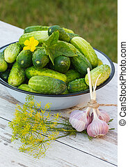 Cucumbers in metal bowl and fresh garlic with dill in garden