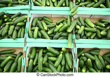 cucumbers in the boxes