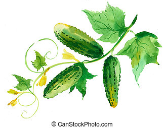 Cucumbers on a branch