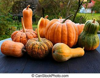 Cucurbita moschata squashes and pumpkins