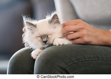 Cuddly cat lying on its owner's lap