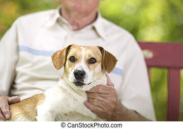 Cuddly dog - Cute dog enjoying cuddling of his elder owner