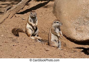 Cuddly ground squirrels