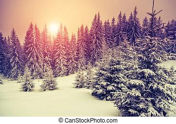 cudowny, zima krajobraz