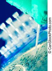cueillette, colonie, bactérien, adn, clonage
