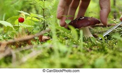 cueillette, mâle, forêt, champignon, mains