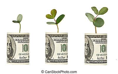 cuenta, saplings, dólar, crecer