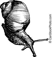 cuernos, poco, gatear, caracol, produce
