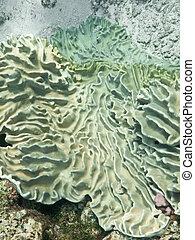 cuero, alomar, coral
