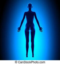 cuerpo, azul, concepto, -, espalda, lleno, hembra, vista
