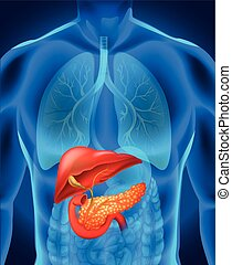 cuerpo,  cáncer, humano,  páncreas
