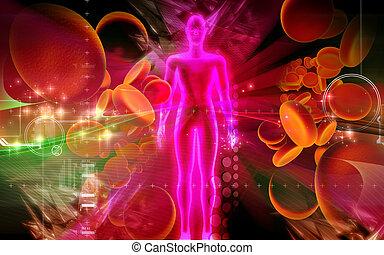 cuerpo célula, sangre, humano