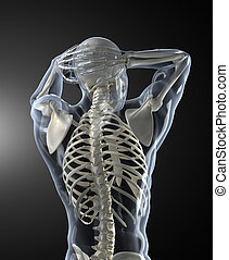 cuerpo escudriña, médico, espalda, humano, vista
