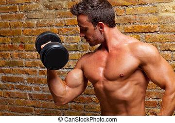 cuerpo, formado, pared, pesas, ladrillo, hombre del músculo