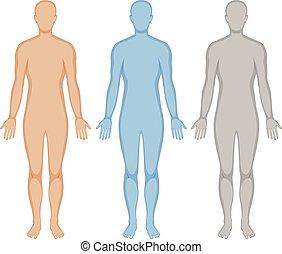cuerpo humano, contorno, en, tres, colores