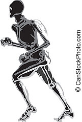 cuerpo humano, hecho, en, eps, articulación