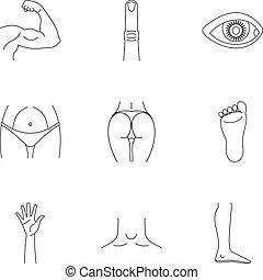 cuerpo humano, iconos, conjunto, contorno, estilo